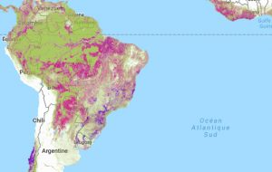 Carte de la déforestation par Global Forest Watch