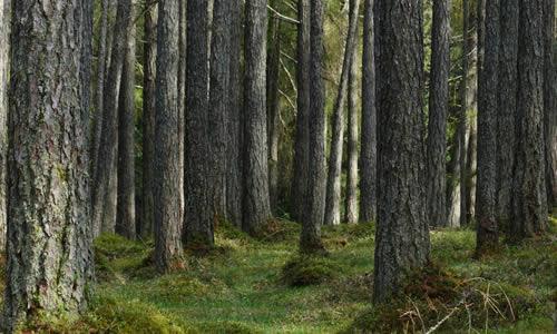 Une forêt densément boisée.