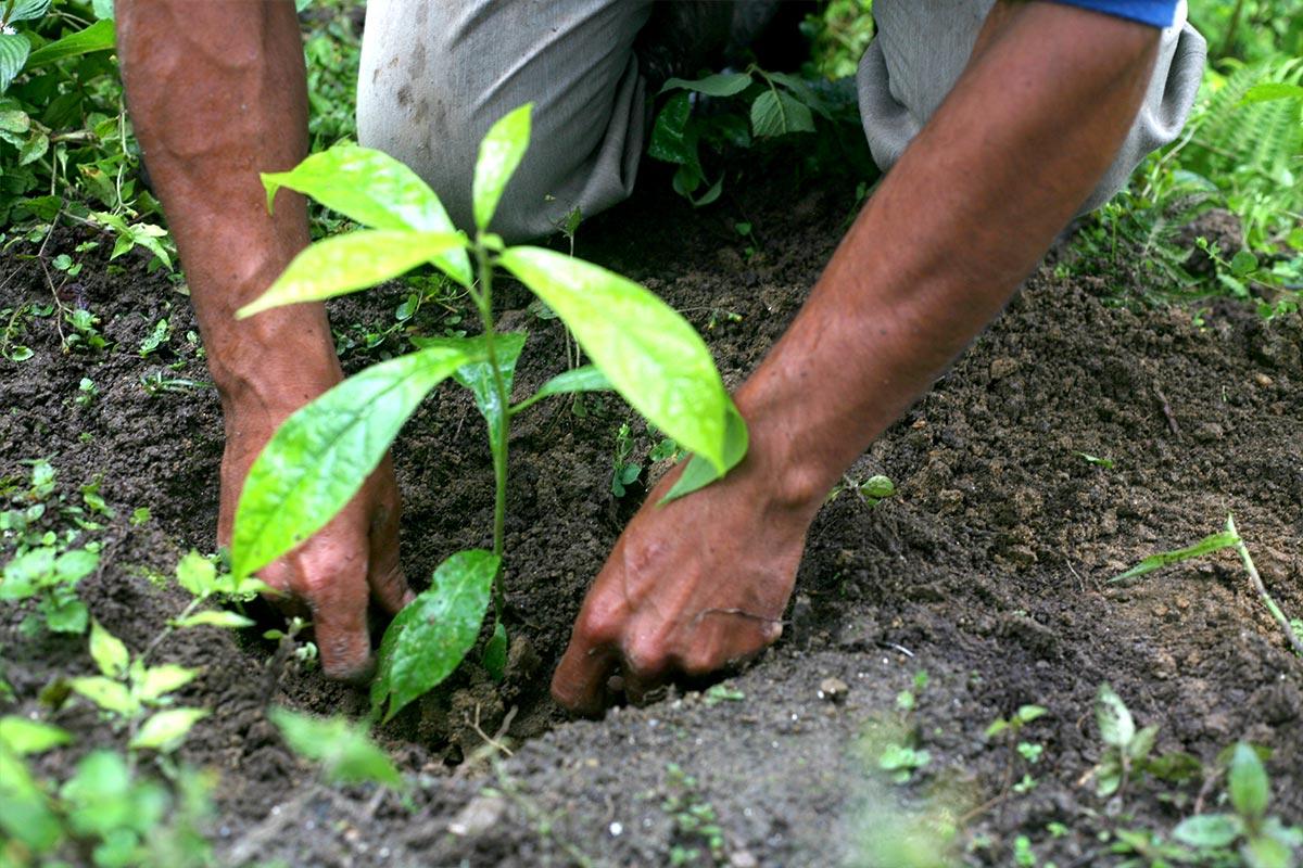 Photo du reboisement en Equateur